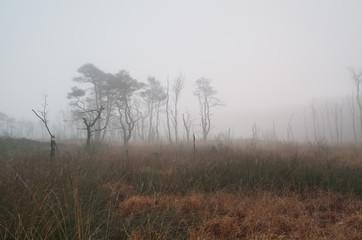 trees on marsh in dense fog