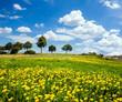 Auszeit im Frühling: Löwenzahnwiese mit Bäumen