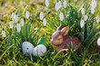 easter eggs and snowdrop outdoor