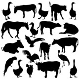 Black set silhouettes zoo animals collection on white backgroun