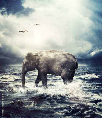 elephant crossing ocean