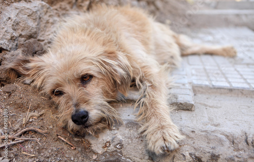 Stray dog with sad eyes