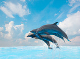 group of jumping dolphins - Fine Art prints