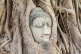Buddha head in tree