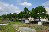 France, allotment garden in Les Mureaux