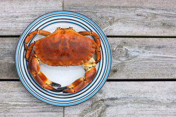 Cooked crab top view on white plate