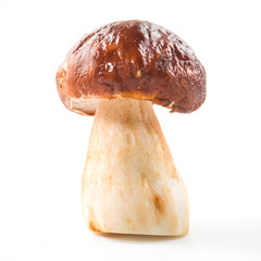 One porcini mushroom. Cep on white background