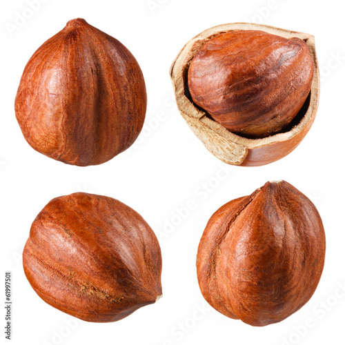 Hazelnut collection isolated on white