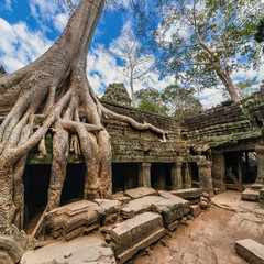 Ancient architecture. Ta Prohm temple, Angkor Wat, Cambodia