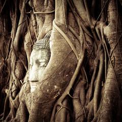 Buddha Head hidden in the tree roots. Thailand