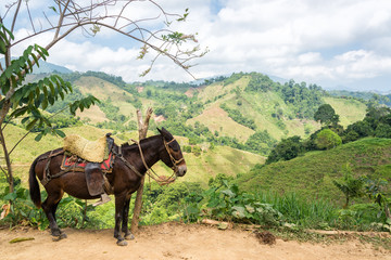 Donkey and Hills