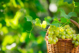 Bunch of white grapes in basket