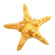 Single star fish isolated on a white background