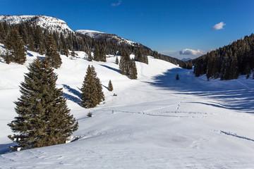 Folgaria - passo Coe - Trentino