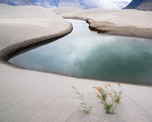 Sand dunes of Nubra Valley. Himalaya, India