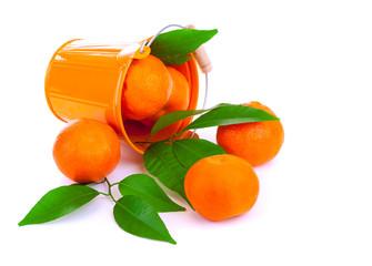 Bucket of fresh mandarins