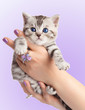 Adorable young cat in woman hands.
