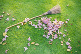 Flowers fall on the green lawn and lawn sweeper