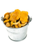 chanterelles in a glass bucket isolated on white