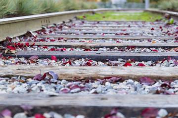 Old rails in yard