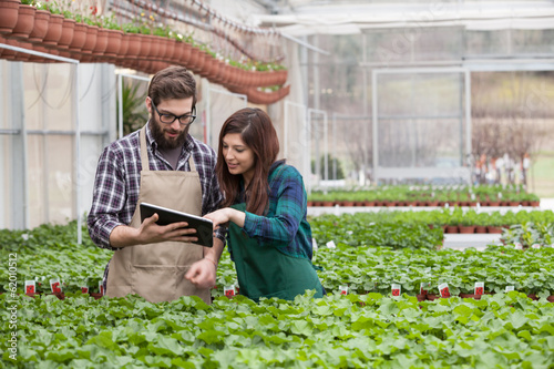 Young adult garden worker in apron using digital tablet