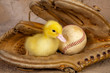 Old baseball glove and easter duckling