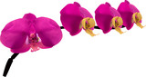 four bright pink orchids on branch