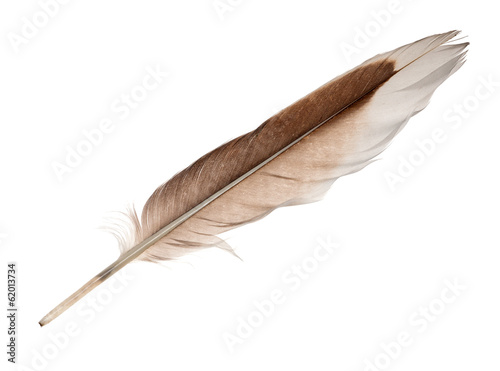 white and brown goose straight feather