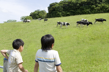 two boys looking at cows on ranch