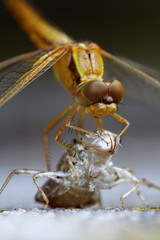 Birth of a dragonfly