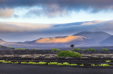extinguished volcanoes in Timanfaya National Park