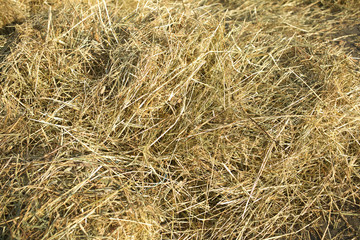 Lots of dry hay, photographed close up as background or texture