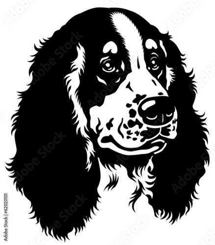 spaniel head black white