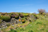 Cornish dry stone wall Cornwall Uk