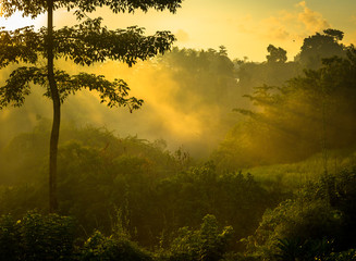 Sunrise over jungle