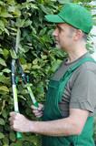 Gärtner schneidet Hecke mit Heckenschere