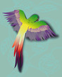 colorful tropical parrot on abstract background flovers