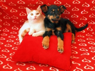Cat and dog: friendship