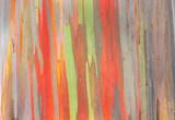 Fototapety Rainbow Eucalyptus