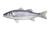 Fototapety fish seabass Isolated on the white background