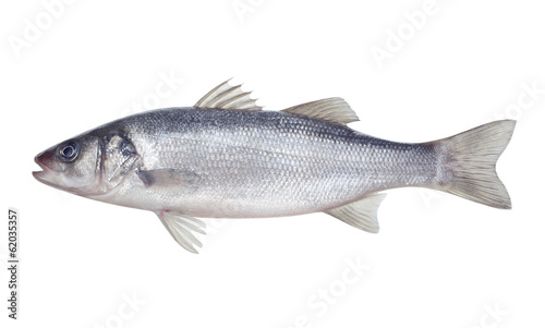 Poster Vis fish seabass Isolated on the white background