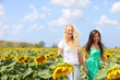 Girlfriends holding hands in sunflower field