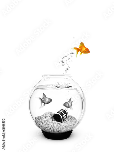 Colored Fish jumping out of a Black and White Fishbowl.