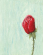 Red rose on light blue background