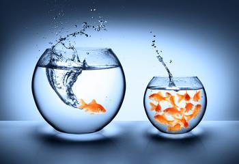 goldfish jumping - improvement concept