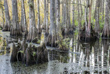Swamp Stump At Slough Preserve
