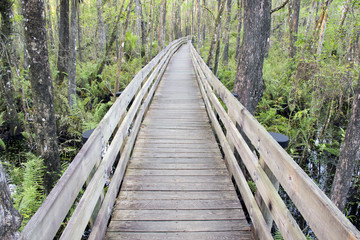 Boardwalk At Swamp Slough Preserve