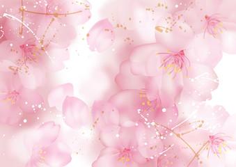 とける桜_白
