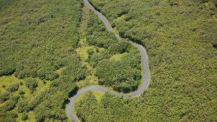 route serpentant dans la végétation