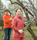 women pruned branches in the orchard